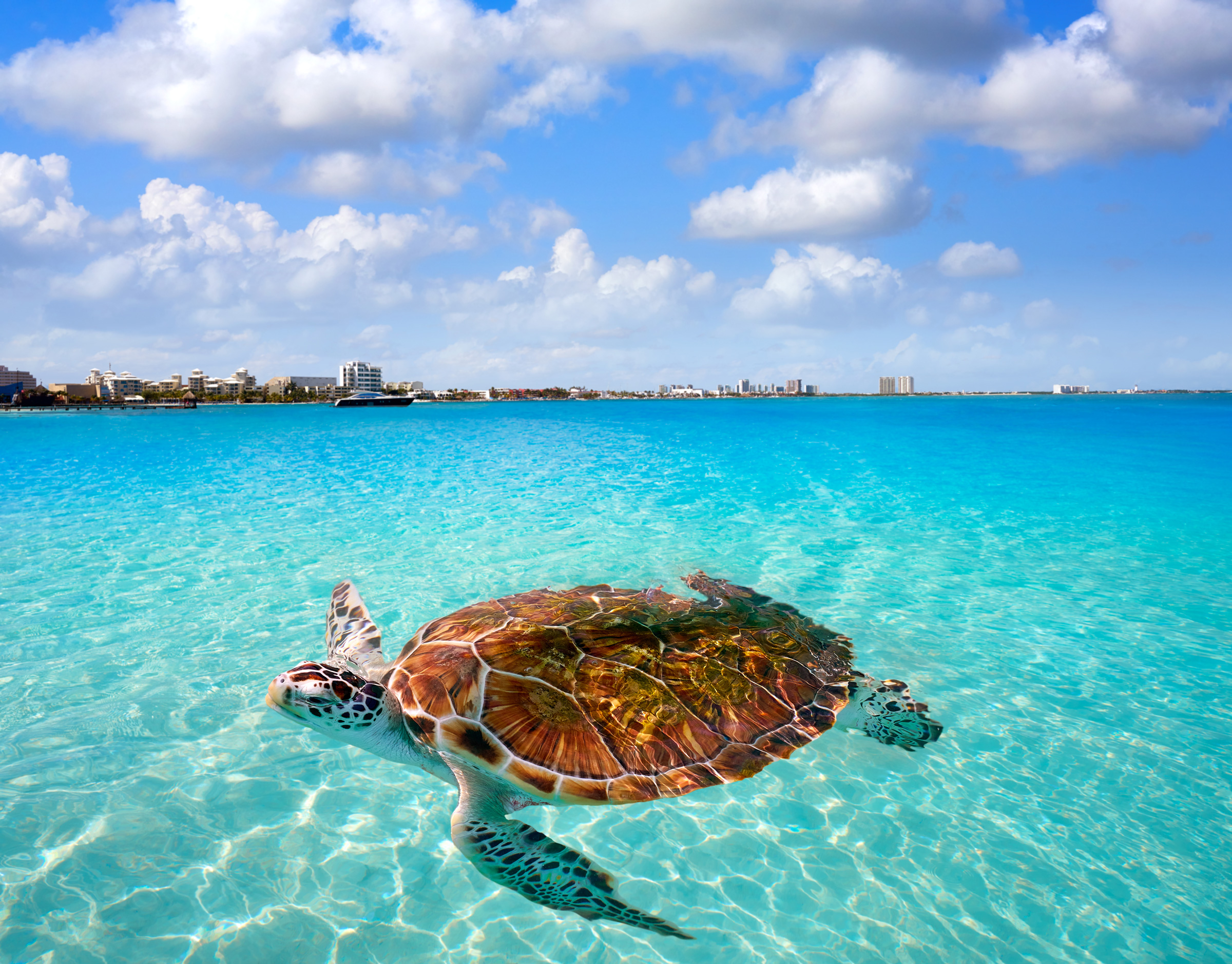 beach-tortugas-travel-in-Park-Royal-Cancun